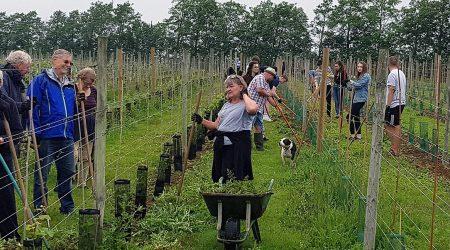 hero-vineyard