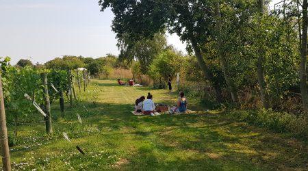 Family picnic at Warden Abbey Vineyard